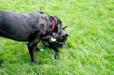 Rex and Midnight playing 081713